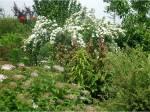 озеленение харьков 15