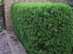 озеленение харьков 20